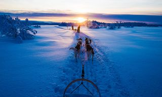Harriniva - Five-Day Husky Safari