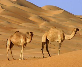Oman family adventure