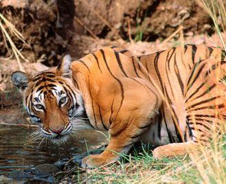 India's Wildlife Treasures