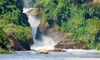Waterfalls & wildlife: Gorillas and Murchison Falls