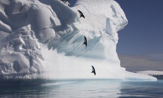 Antarctic Peninsula cruise