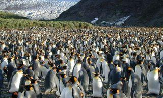 Shackleton's Antarctica, South Georgia and the Falklands