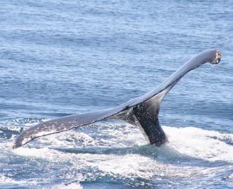 Cruising & whale watching in Baja California