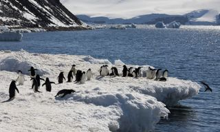 Antarctic Peninsula Fly and Cruise