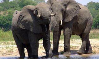 Source of the Nile safari