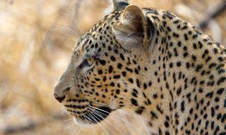 Zambia's wildlife & Victoria Falls