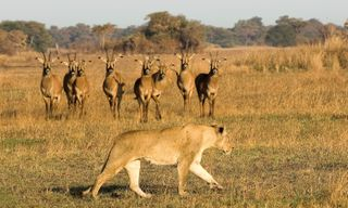 Secrets of Kafue National Park