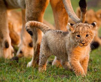 Culture, villages & wildlife of the Mara
