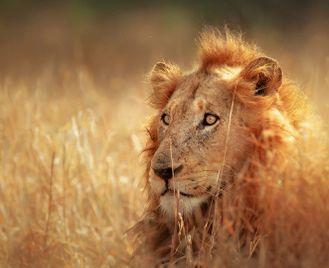 Kruger safari  & Mozambique explorer