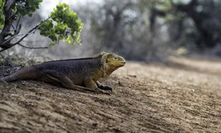 Highlights of Colombia, Ecuador & Galapagos