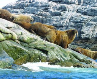 Nunavik: Wildlife & Inuit Culture