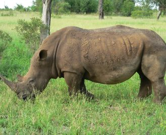 Mpumalanga self-drive & Kruger safari