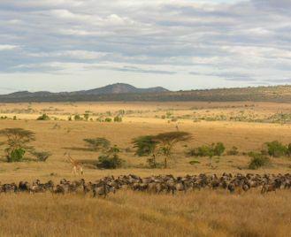 Classic Northern Tanzania safari