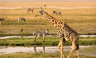 Chobe National Park and the Okavango Delta