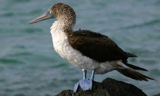 Galapagos island-hopping tour