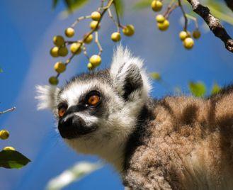 Luxury Madagascar tour