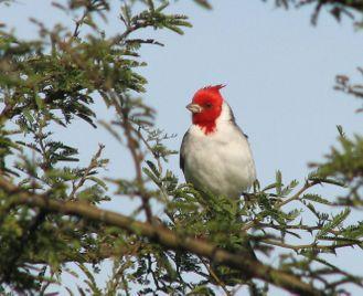 Argentina's wildlife: Peninsula Valdes, the wetlands & Iguazu