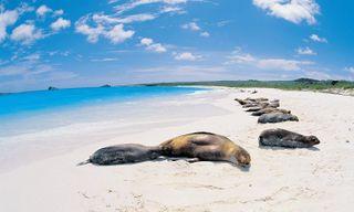 Galapagos & Costa Rica tour