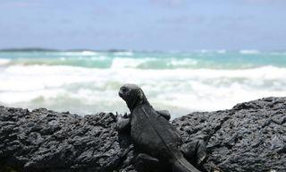 Galapagos from Ashore