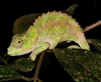 Madagascar's southern national parks