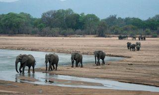 Victoria Falls, Luangwa & Lower Zambezi safari