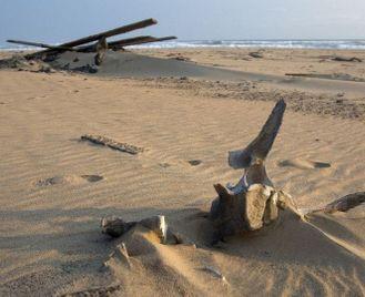 Skeleton Coast flying safari
