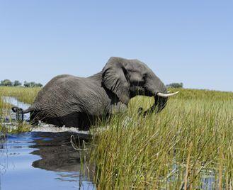 Botswana's Okavango Delta and Victoria Falls safari