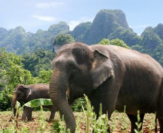 Thailand beach & rainforest escape