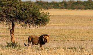 Green season safari in the Okavango Delta
