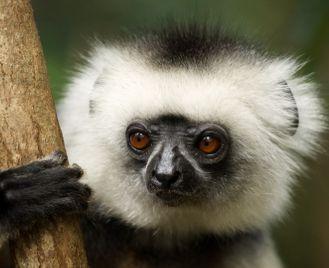 Madagascar rainforest & island escape
