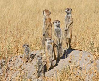 Botswana's salt pans safari