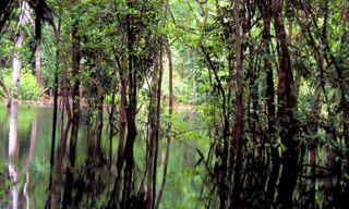 Brazil in a nutshell: Iguacu Falls, Amazon & Rio
