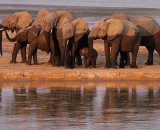Wild Zambia on Foot
