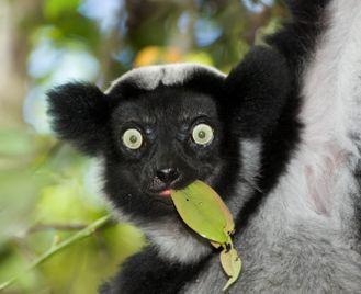 Madagascar family adventure