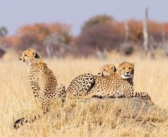 Wildlife & water: Hwange and Victoria Falls safari