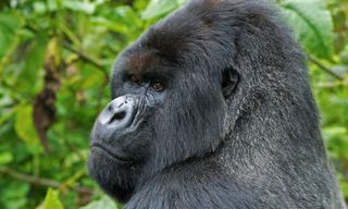 Gorilla & Zanzibar Adventure