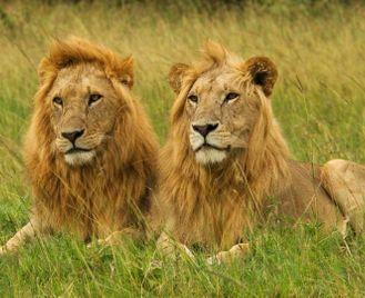 Green season safari in Kenya & Zanzibar