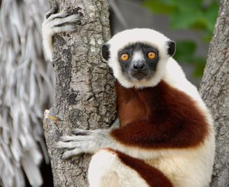 Hidden Madagascar Honeymoon