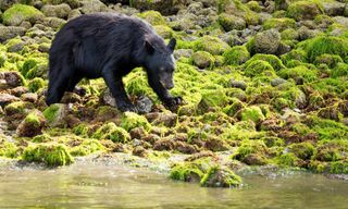 Canada's Western Wilderness & Wildlife Self-Drive