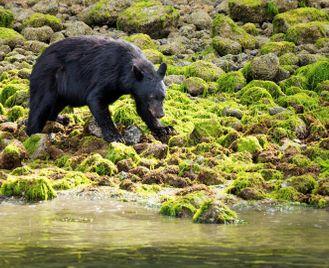 Canada's Western Wilderness & Wildlife Self-Drive
