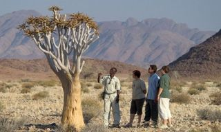 Desert & delta: Namibia self-drive & Botswana safari