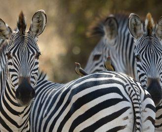 Luxurious Luangwa & Lower Zambezi