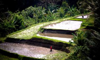 A Family Adventure on Bali