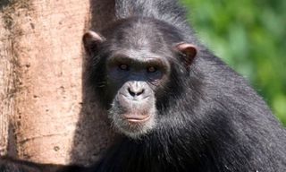 Uganda Primate Explorer