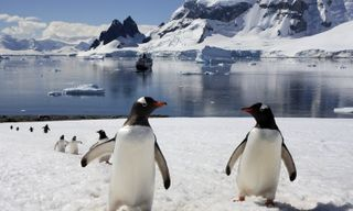 Active Antarctica: Cruise, camp, trek & dive