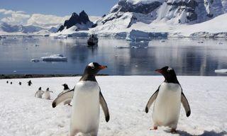 Active Antarctica: Cruise, camp, trek & dive