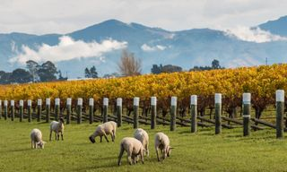 New Zealand's Food & Wine Trail self-drive
