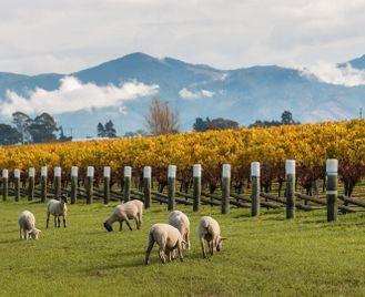New Zealand's Food & Wine Trail self-drive