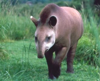 Wildlife of Brazil