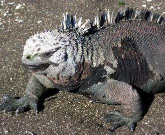Galapagos Odyssey Escape
